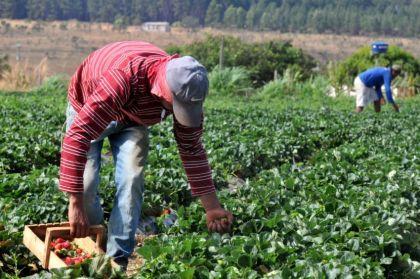 Prefeito Hildo do Candango incentiva a agricultura no município